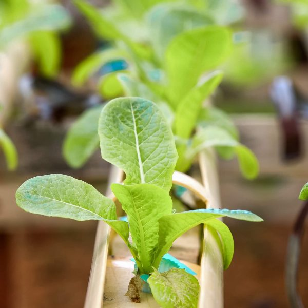 Jardin Organico Gracia